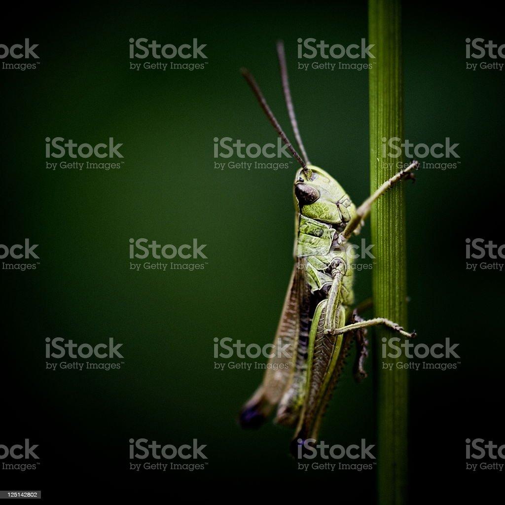Little grasshopper is watching stock photo