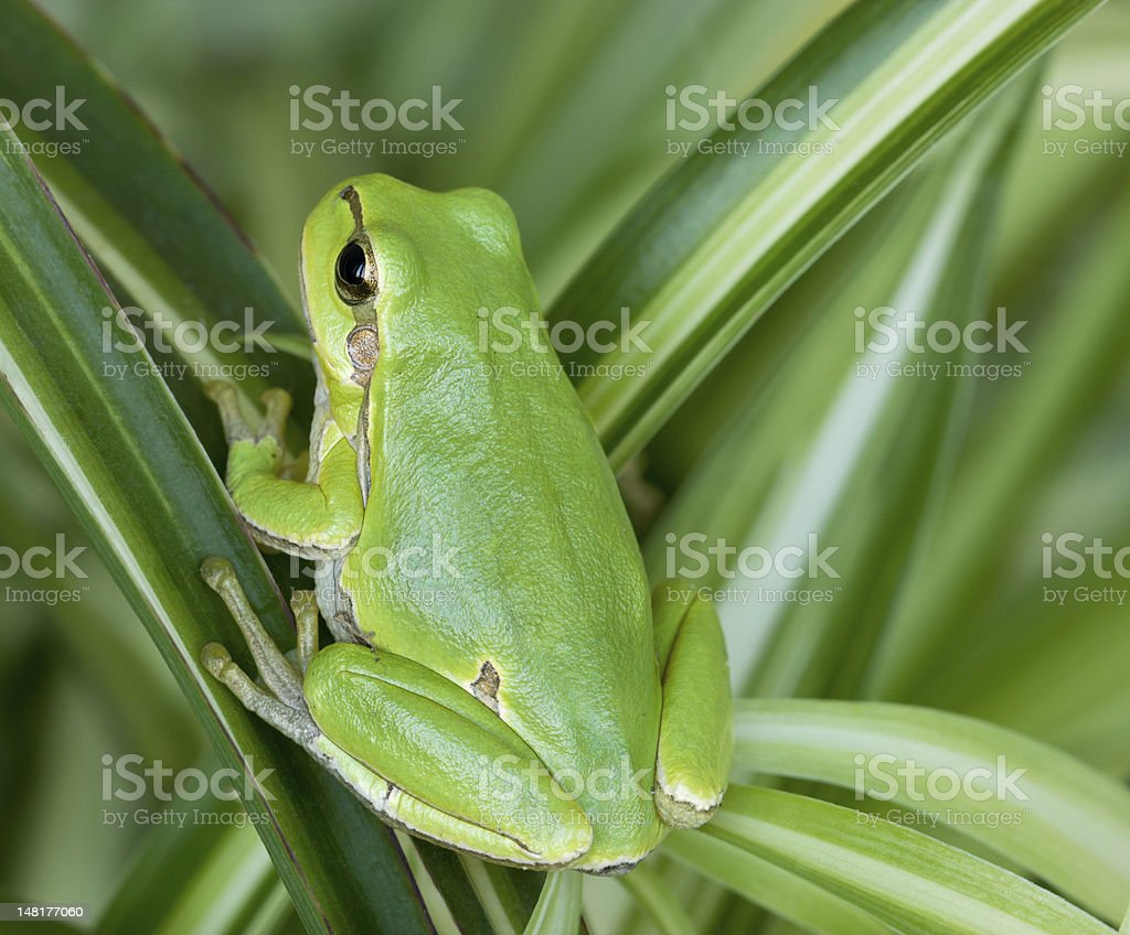 Little green frog stock photo