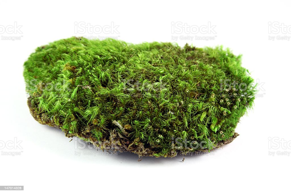 A little green pile of moss on a white background  royalty-free stock photo