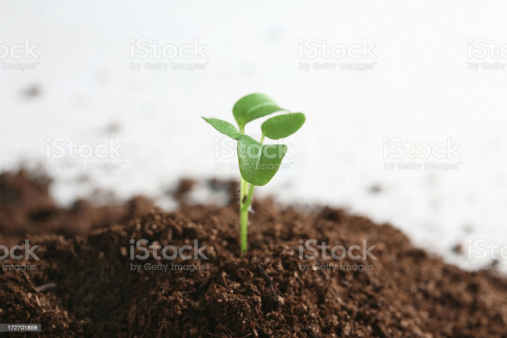 little green plant royalty-free stock photo