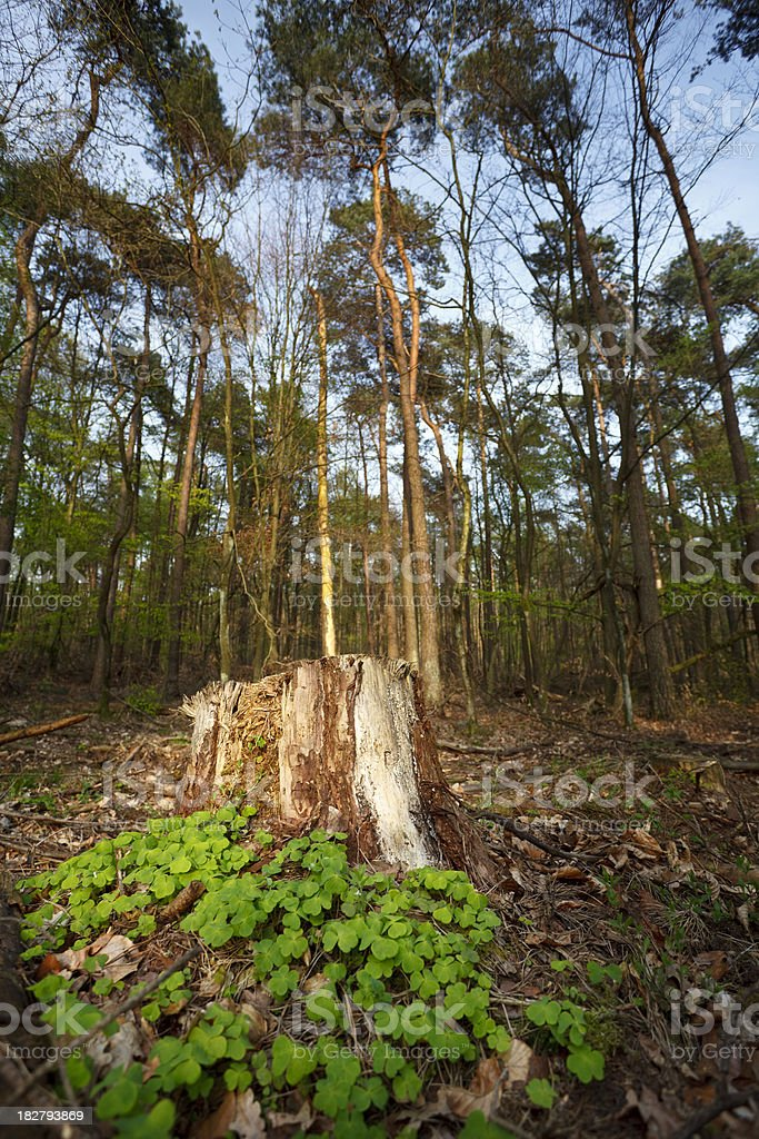 Little Green Spot In A Forest royalty-free stock photo