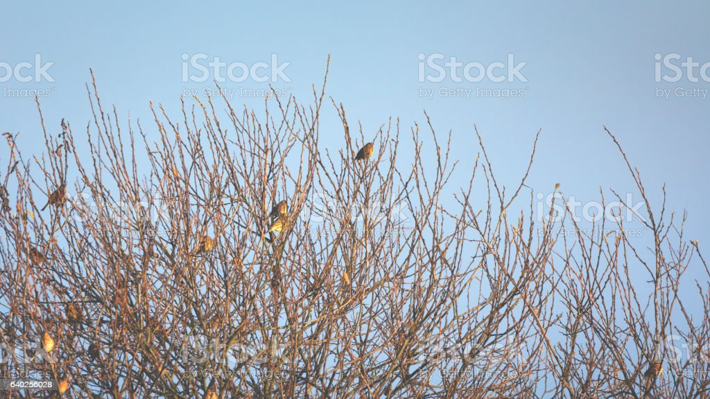Little group of birds are sitting on branch in winter stock photo
