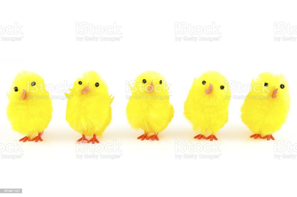 Petits Poilu chicks photo libre de droits