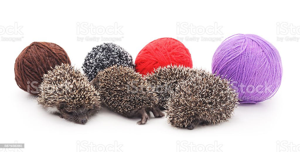 Little hedgehogs and fur balls. stock photo