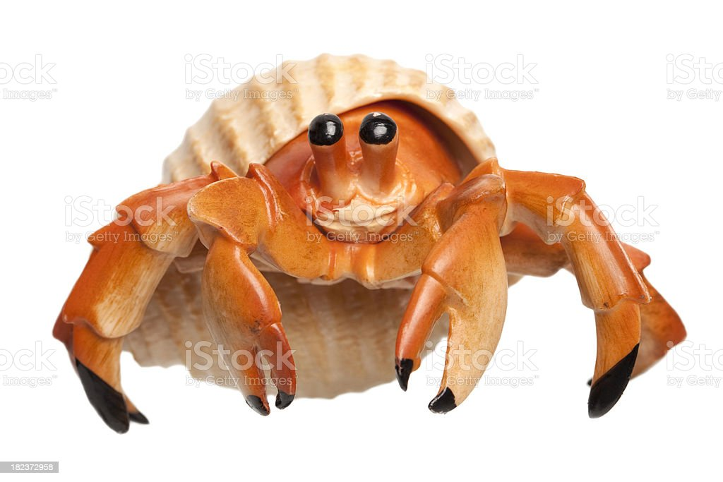 Little Hermit Crab stock photo