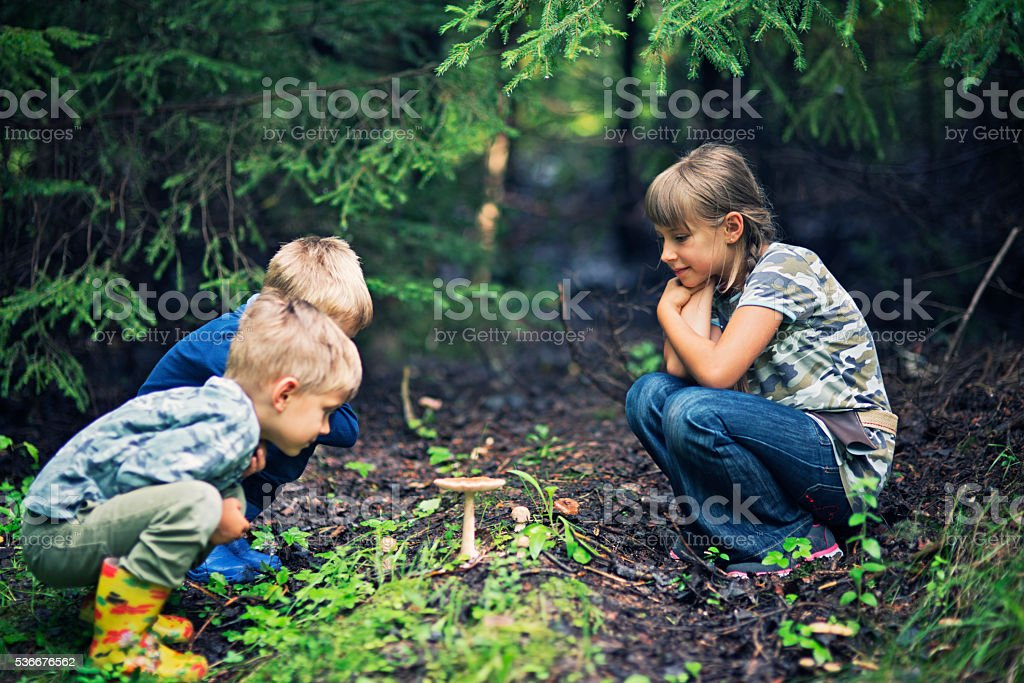 Little hikers picking mushrooms in forest stock photo