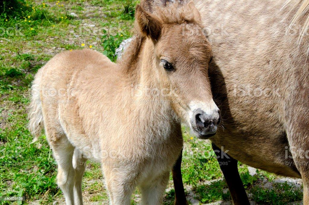 Little Horse stock photo