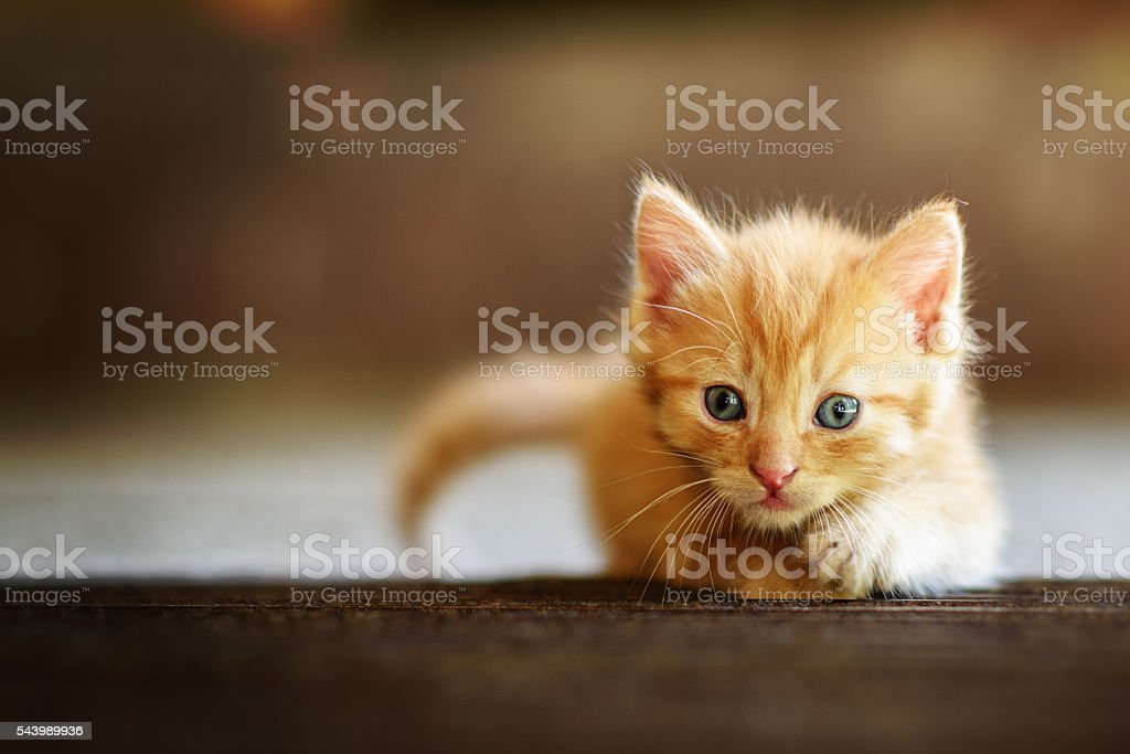 Little Hunter stock photo