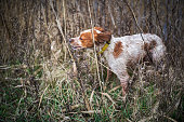 Little hunting dog in the grass area