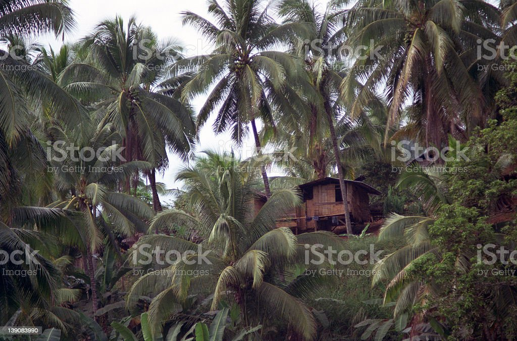 Little Hut on Tropical Hill with Palm Trees royalty-free stock photo