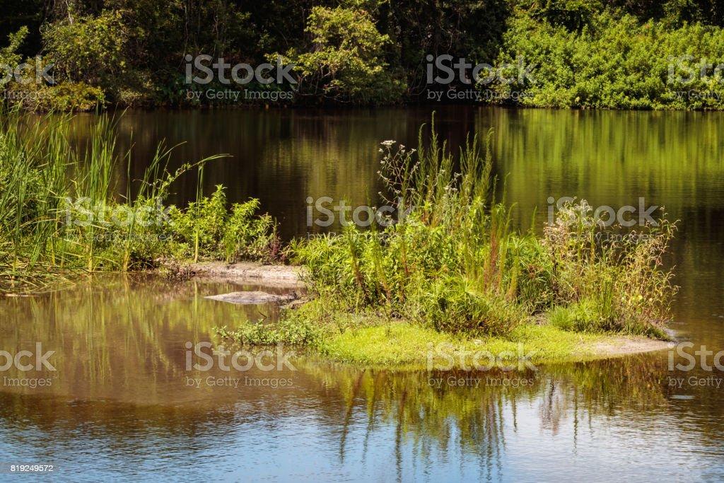 little island on lake plant growing stock photo