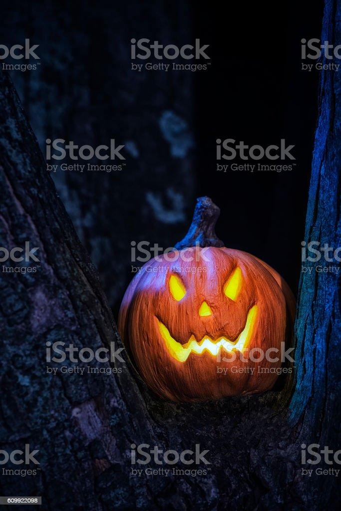 Little Jack O' Lantern sitting in a tree fork stock photo