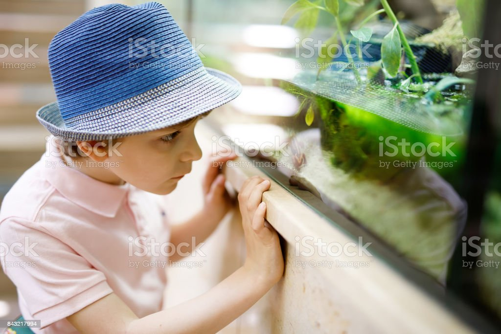 Little kid boy admire different reptiles and fishes in aquarium stock photo