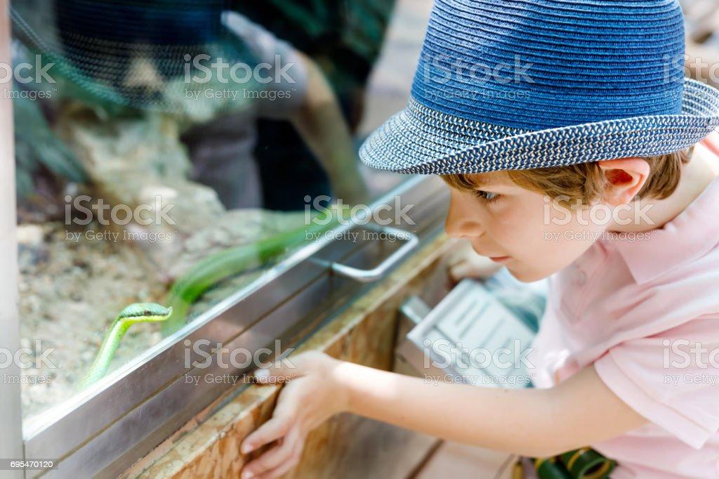 Little kid boy admire Poisonous green snake in terrarium stock photo