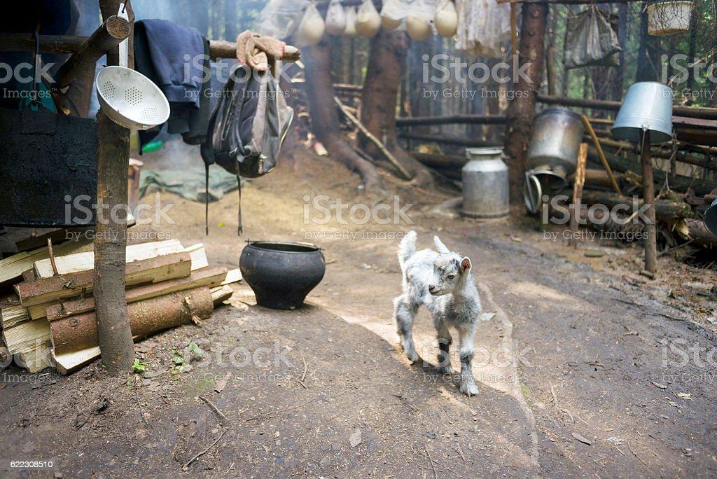 Little kid in the parking lot Hutsul shepherds stock photo