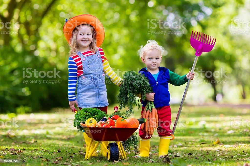 Little kids gardening and farming vegetables on organic farm stock photo