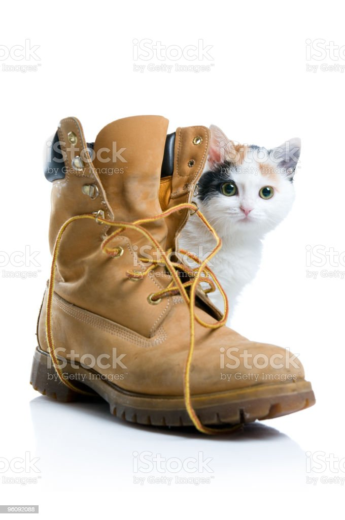Little kitten and boot royalty-free stock photo
