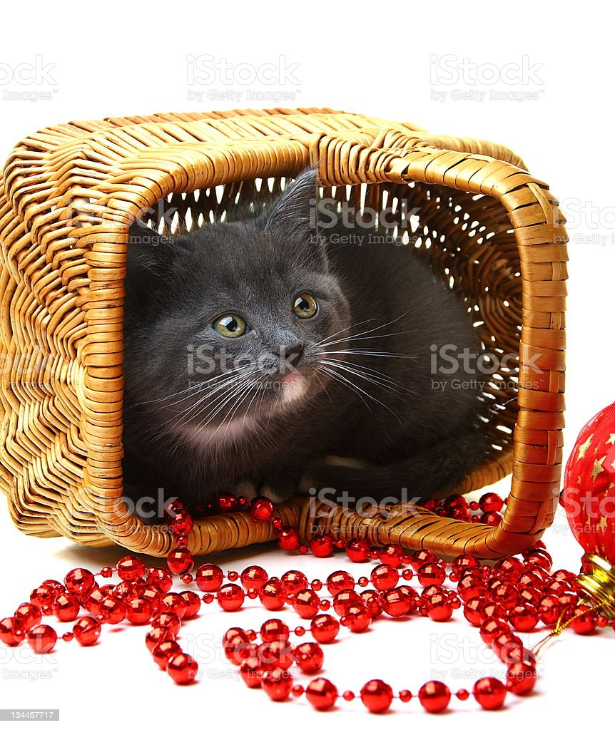 Little kitten in a basket with Christmas toys. royalty-free stock photo