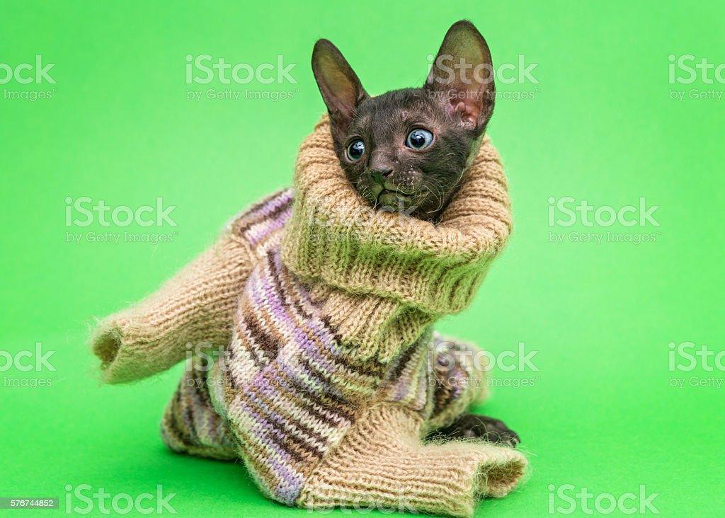 Little kitten  in a knitted sweater stock photo