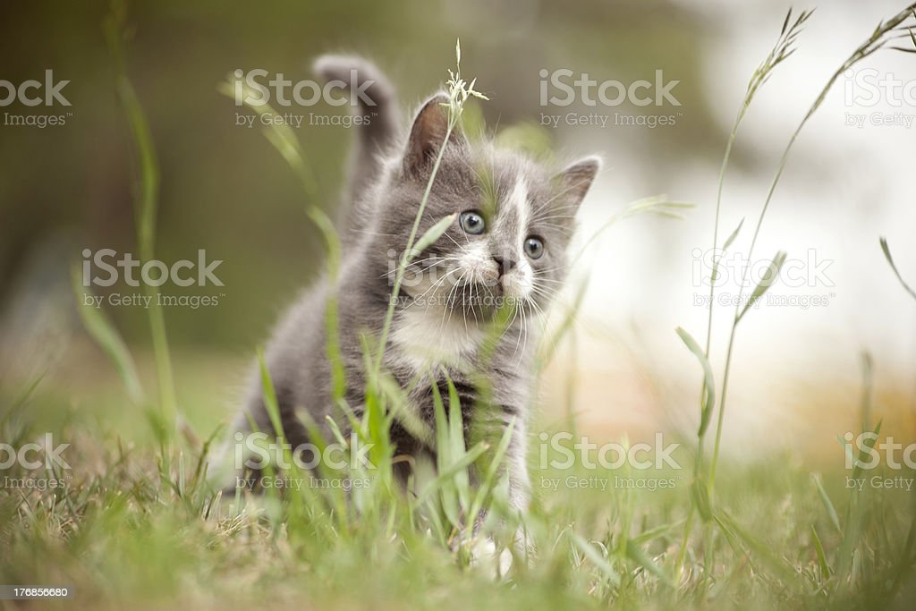 Little kitten in the grass royalty-free stock photo