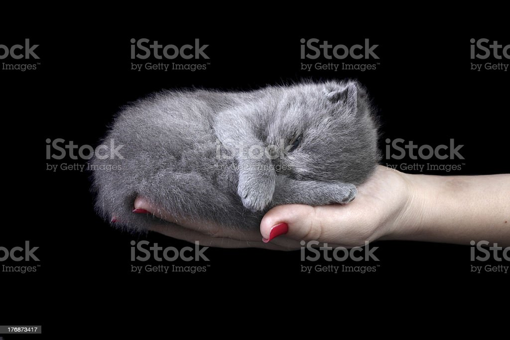Little kitten in the hand royalty-free stock photo