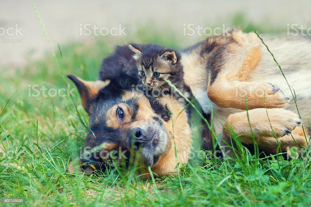 Little kitten lying on dogs head stock photo
