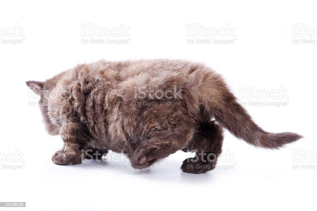Little kitten on white background stock photo