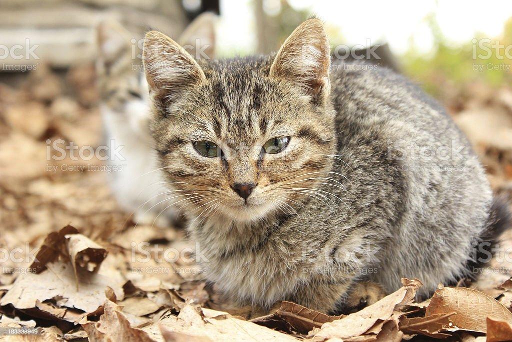 Little kitten royalty-free stock photo