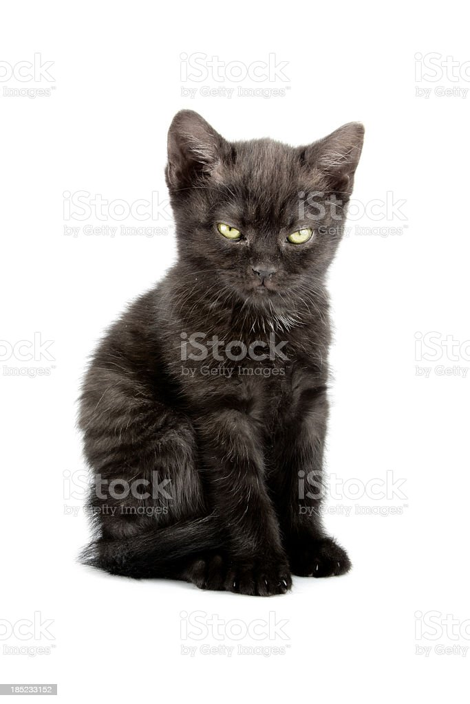 Little kitten royalty-free stock photo