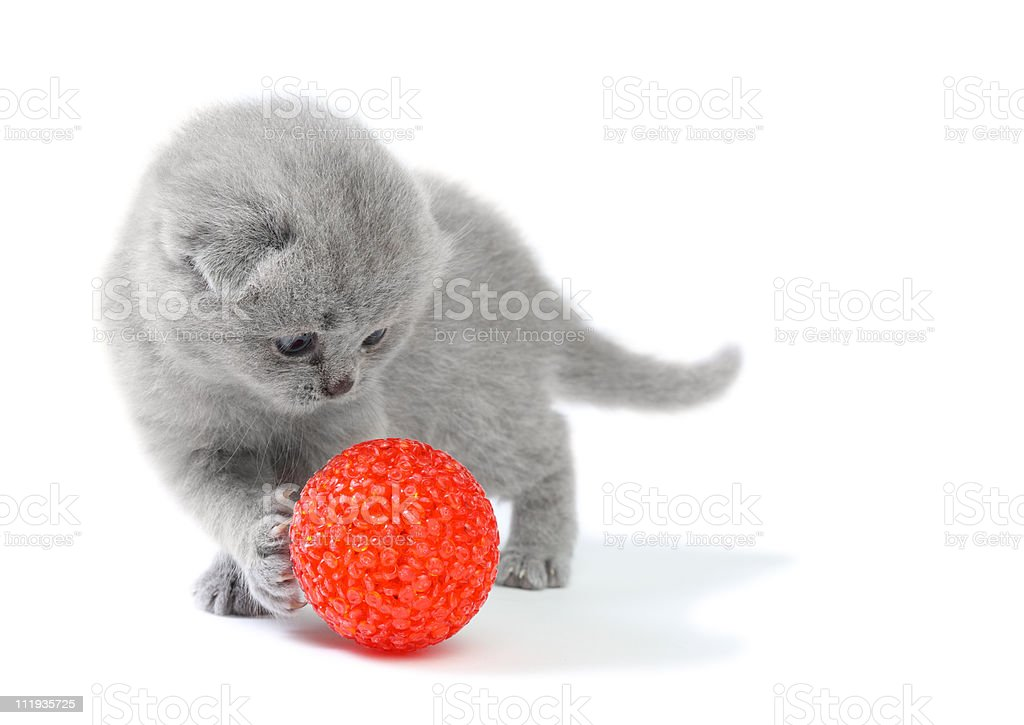 Little kitten playing with ball stock photo