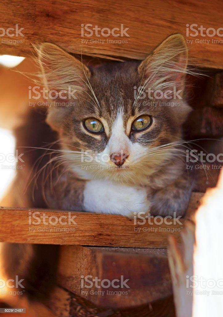 Little kitten sitting on the boards stock photo