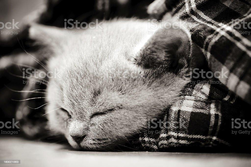 Little kitten sleeping royalty-free stock photo