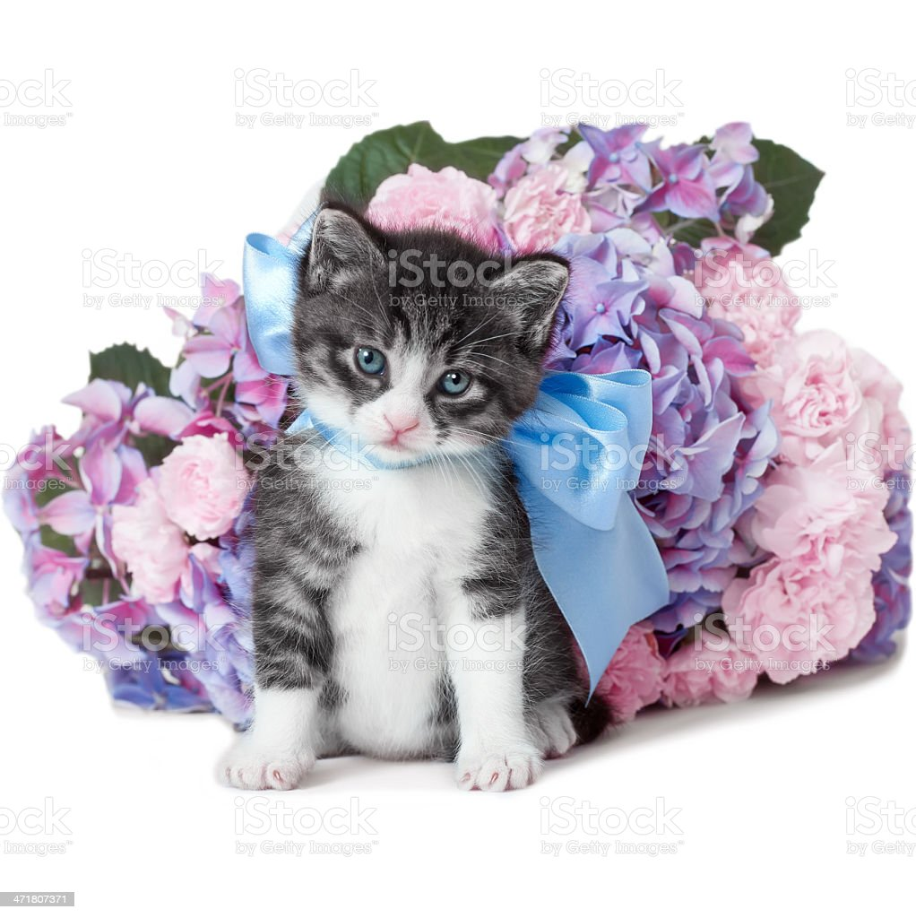 Little kitten with a bow and flowers royalty-free stock photo