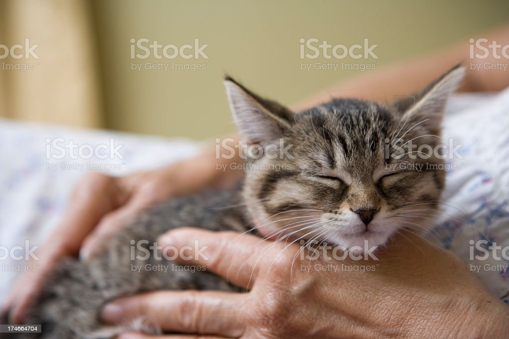 Little Kitten with an Elderly Senior Woman stock photo