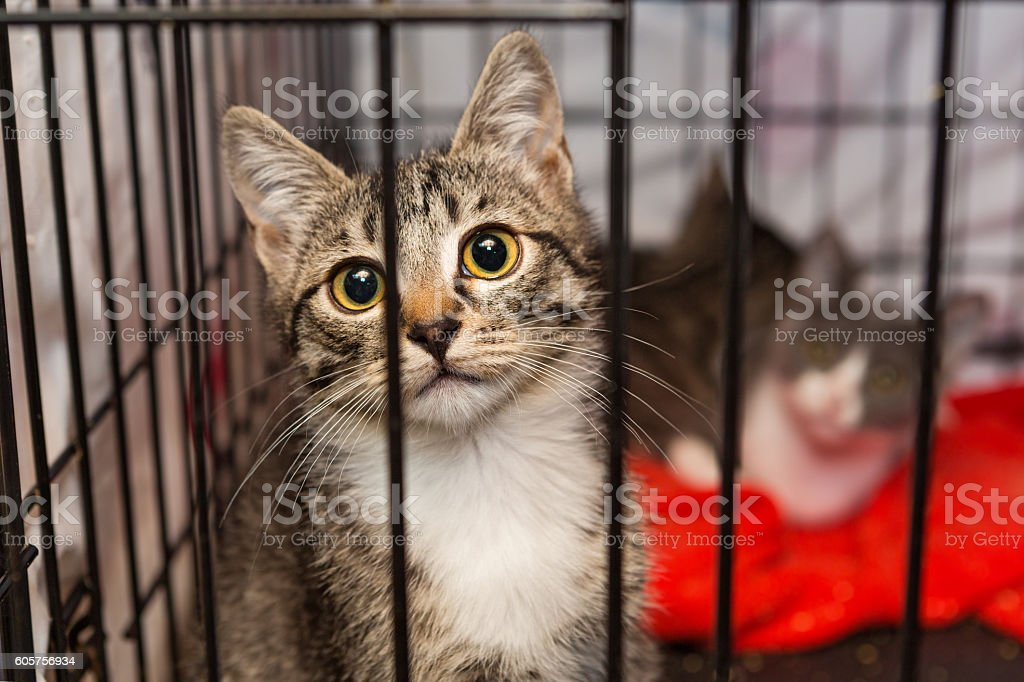 Little kittens in a cage of a shelter stock photo
