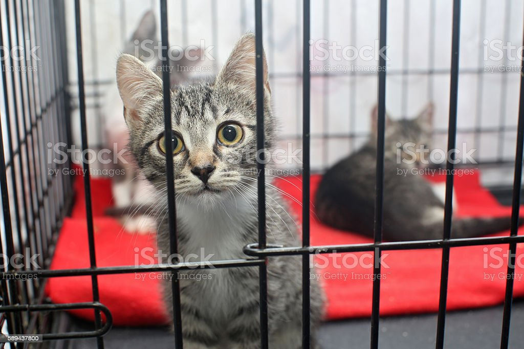 Little kittens in a cage stock photo