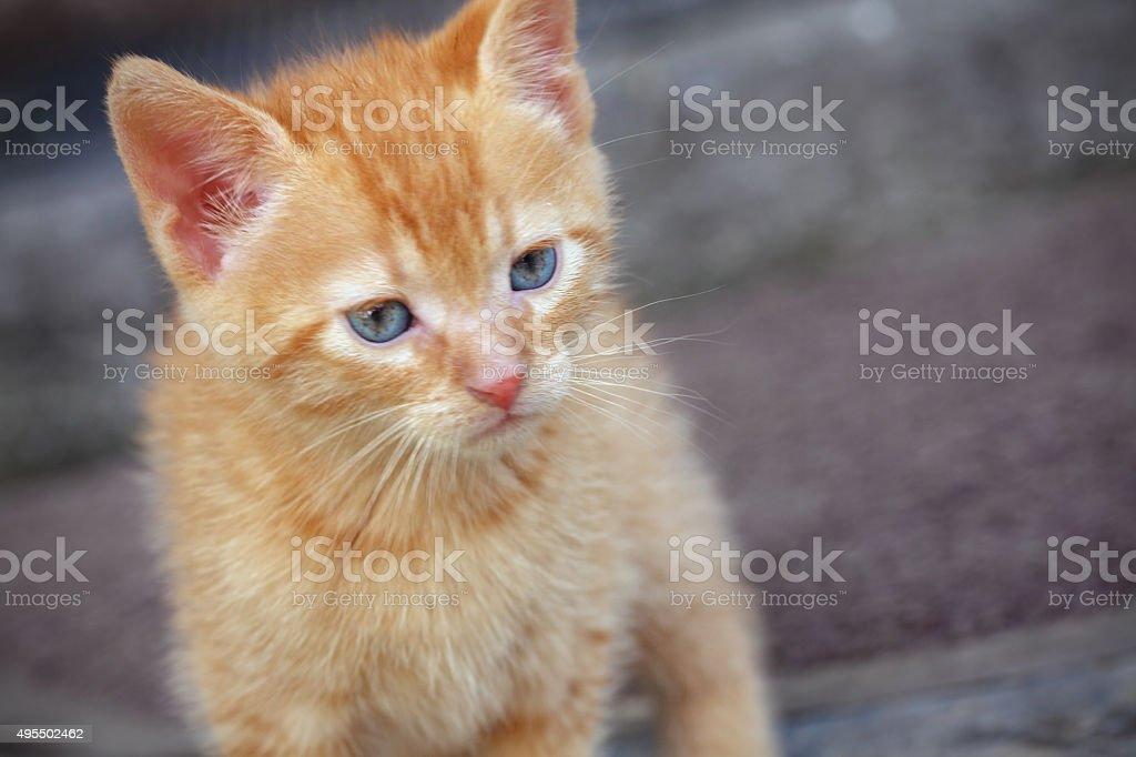 Little kitty stock photo