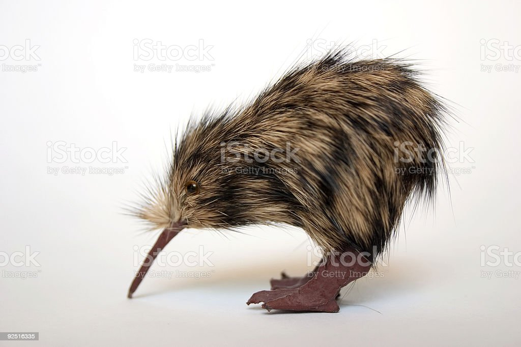 A little kiwi on a white background royalty-free stock photo