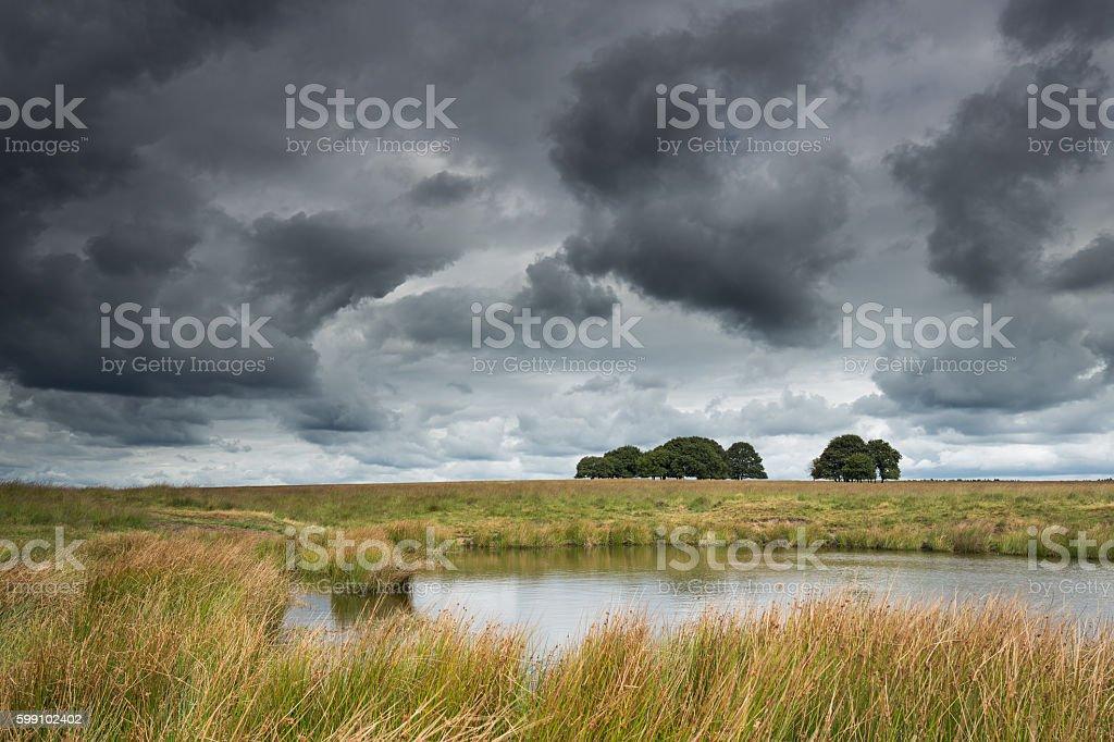 Little lake in National Park De Hoge Veluwe. stock photo