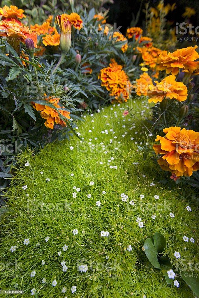 Little magic garden royalty-free stock photo