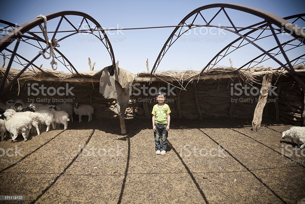 little Mongolian boy in the Sheep pen royalty-free stock photo
