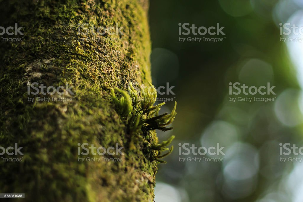 little moss on the tree royalty-free stock photo