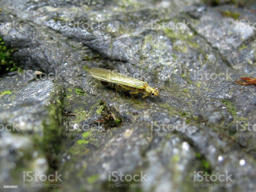 Little mountain insect royalty-free stock photo