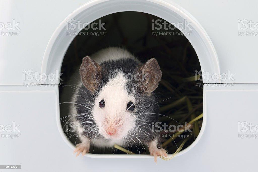 マウスを少し注目の穴 ロイヤリティフリーストックフォト