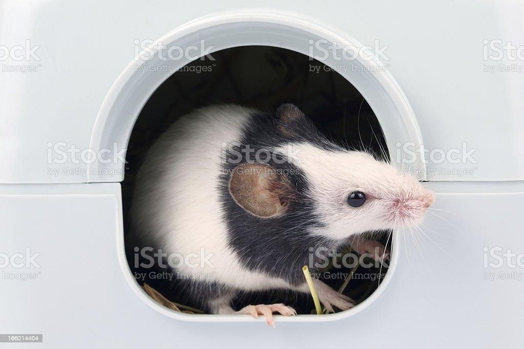 マウスを少し外の穴 ロイヤリティフリーストックフォト