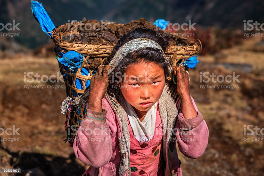 Little Nepali girl carrying around 40kg yak's dung stock photo