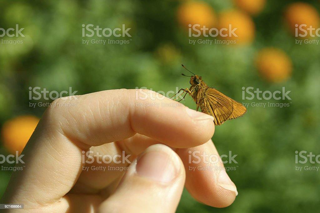 little orange butterfly on finger stock photo
