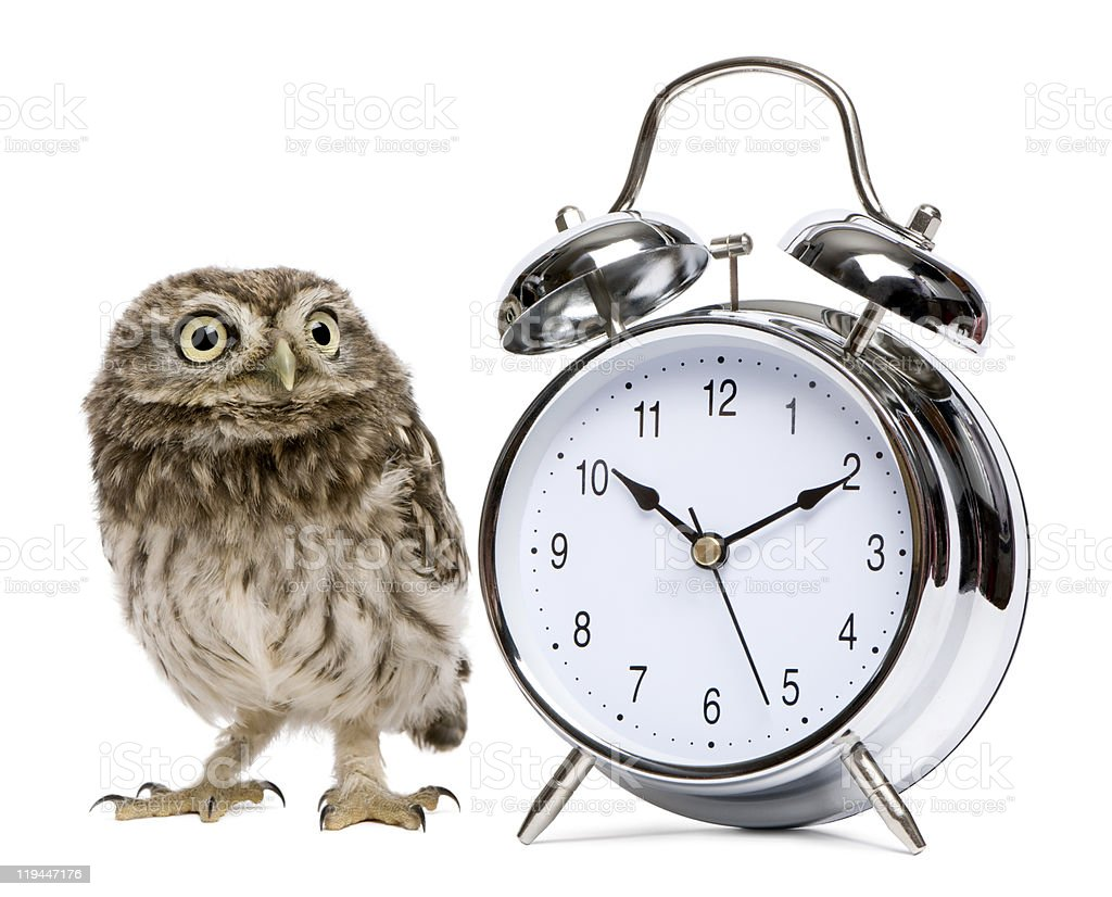 Little Owl, 50 days old, standing with alarm clock royalty-free stock photo
