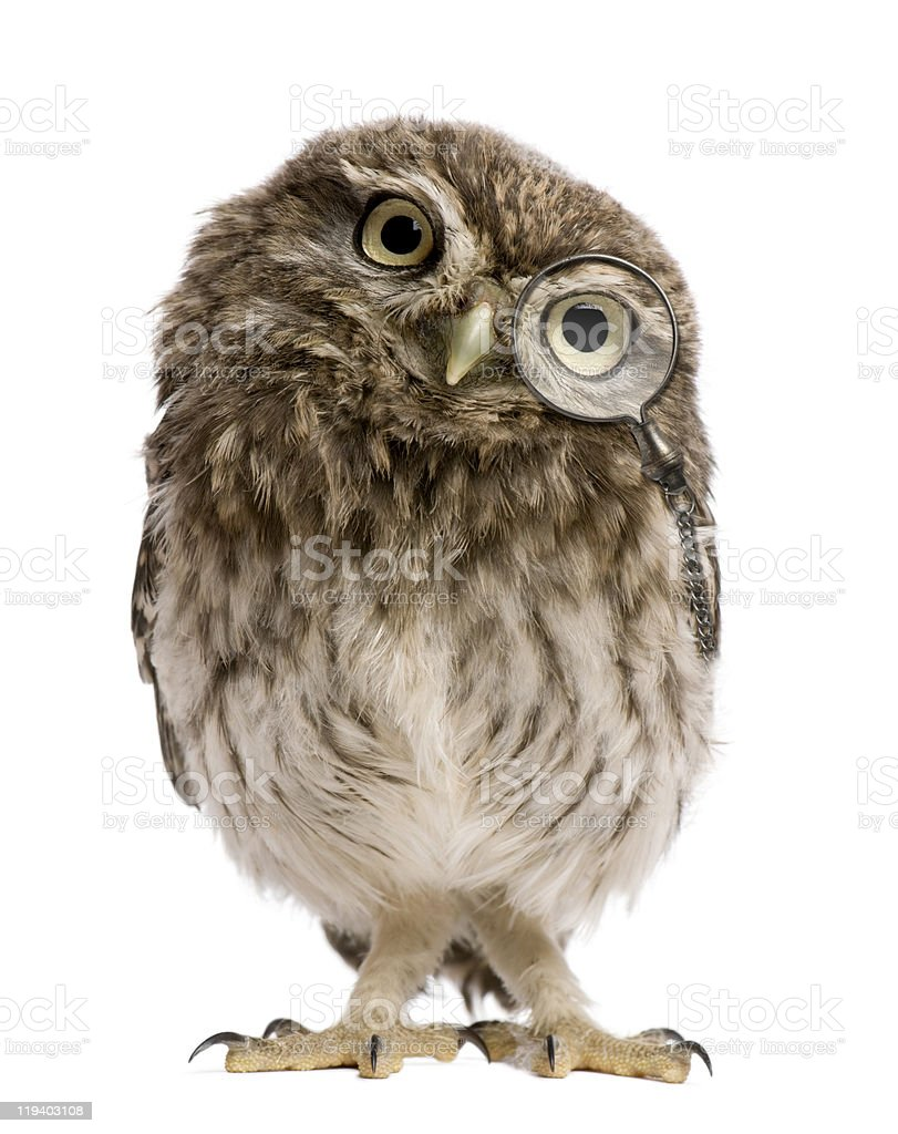Little Owl wearing magnifying glass, 50 days old, standing. stock photo