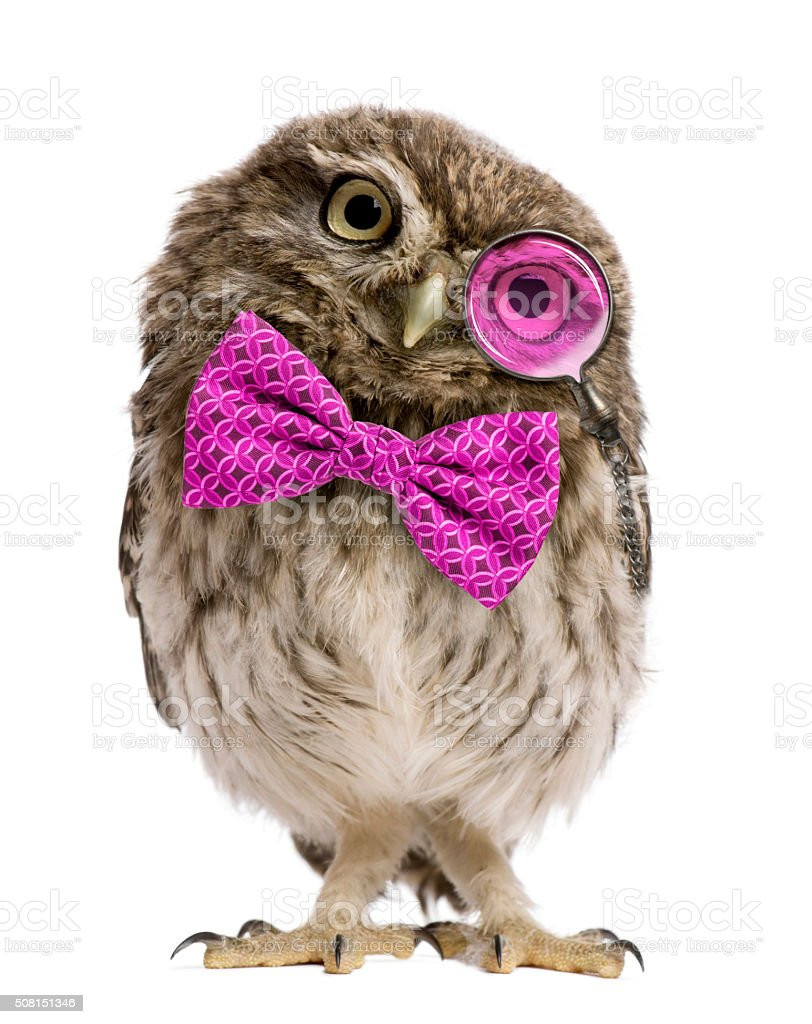 Little Owl wearing magnifying glass and a bow tie stock photo